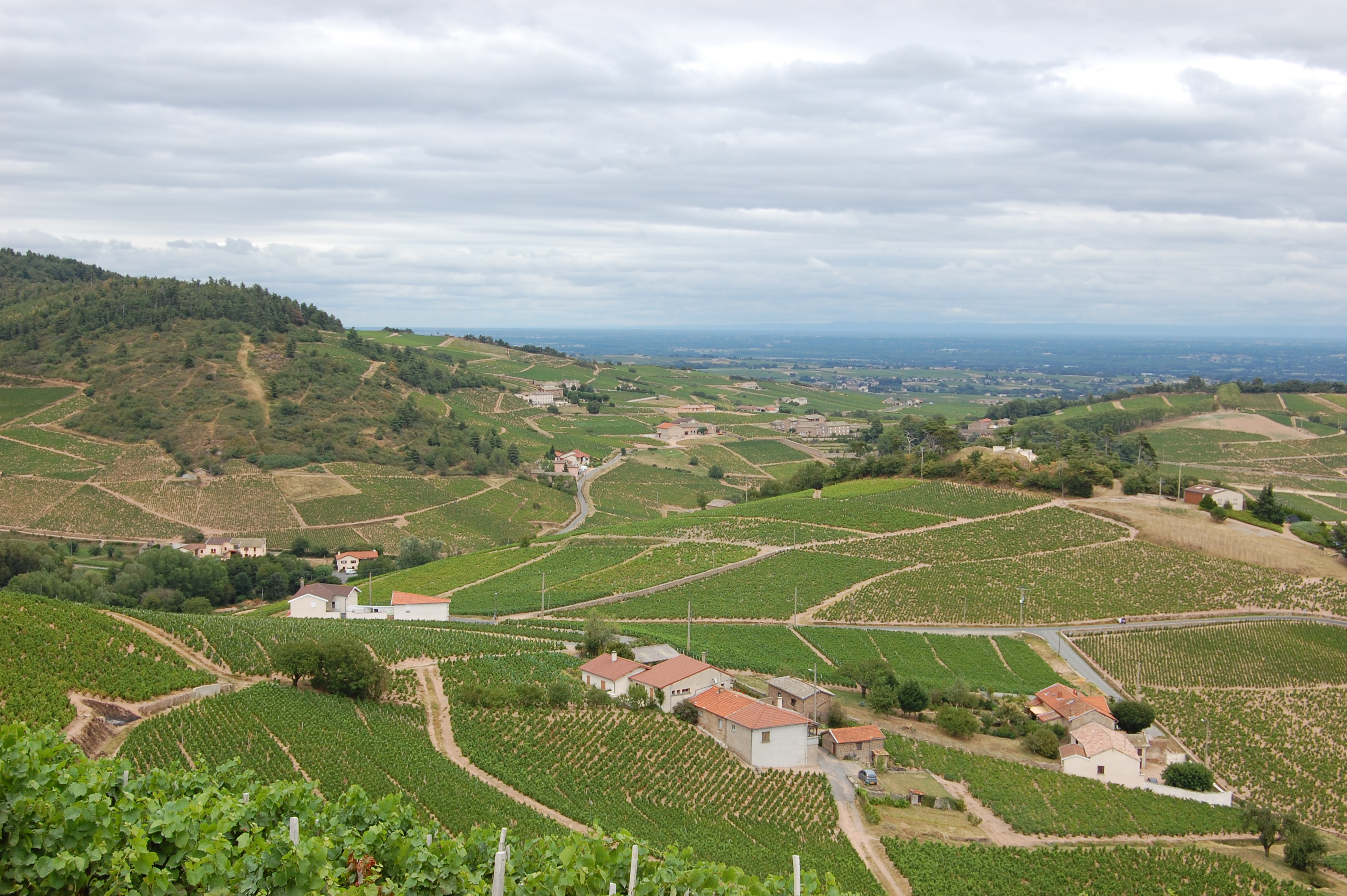 Beaujolais AOC Chiroubles
